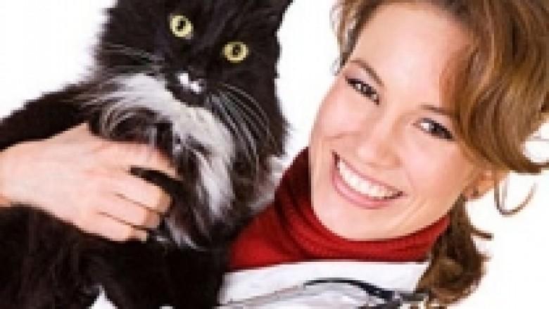 Përkujdesja veterinare për macet
