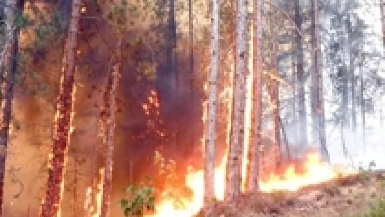 Mobilizohen për mbrojtjen e pyjeve nga zjarri