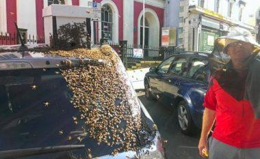Bletët ndjekin makinën për dy ditë – për një arsye shumë interesante (Foto)