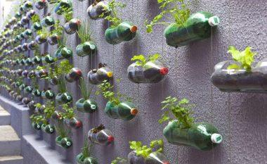 Gjelbërimi në shishe plastike