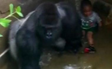 Momenti kur gorilla qëllohet derisa po e 'mbronte' djaloshin 4-vjeç që kishte rënë në kafazin e tij (Foto/Video, +16)