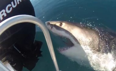 Peshkaqeni 3.5 metra terrorizon peshkatarët (Video)