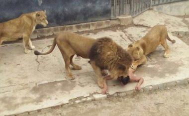 """Djaloshi që """"hodhi"""" veten tek luanët mendonte se ishte profet (Foto/Video,+16)"""