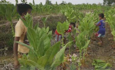 Fëmijët e mjerë që detyrohen të punojnë në fushat e duhanit (Video)