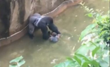 Fëmija tërhiqet zvarrë nga gorilla (Video,+18)