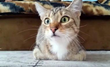 Reagimet qesharake të maces që shikon filma horror (Video)