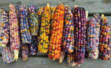 Ky misër shumëngjyrësh nuk është lodër, por ushqim ! (Foto)