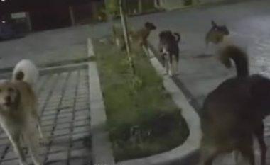 Qentë endacakë sulmojnë vozitësin tek parku Gërmia në Prishtinë (Video)