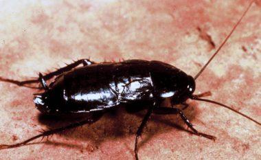 Detyroi pronaren e restorantit, të përpijë insektin që e gjeti në ushqim (Foto)