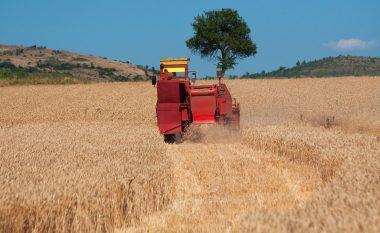 Ka nisur fushata e korrje-shirjeve, sivjet priten rendimente më të larta