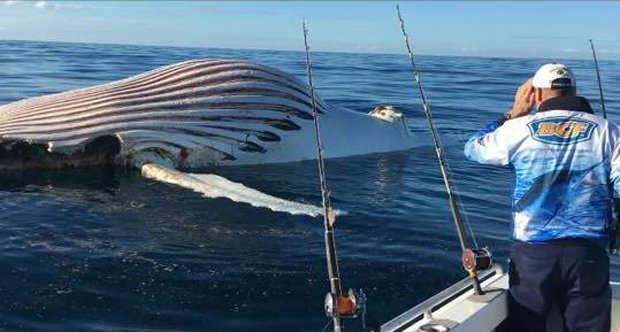 Peshkatari gjeti perbindeshin jashtetokesor duke levizur ne det foto 2