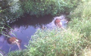 Në Shtrubullovë të Drenasit, lopët e ngordhura hidhen në përroskë (Foto)