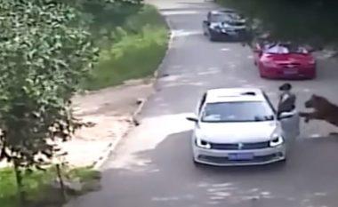 Shikoni se si tigri tërheq zvarrë gruan në një park (Video, +18)