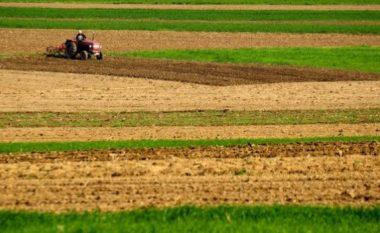 Kosovarët rrezikojnë të mbesin pa bukë për shkak të