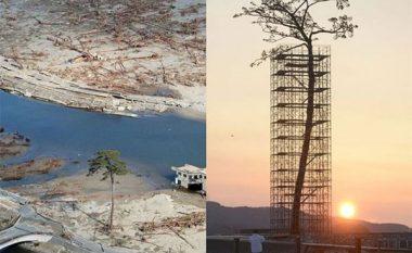 Pemët e jashtëzakonshme që u mbijetuan të gjitha llojeve të fatkeqësive (Foto)