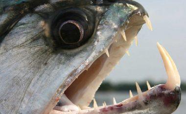 Peshqit e gjetur në liqenin e Dojranit nuk janë të rrezikshme për njerëzit