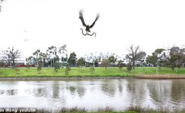 Shqiponja hodhi një gjarpër afër familjarëve që po pushonin pranë lumit (Video)
