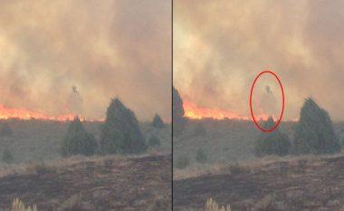 Fotografonte pyllin që po digjej, por kap diçka të pazakontë (Foto)
