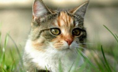 Misteri i zhdukjes së maceve në Austri