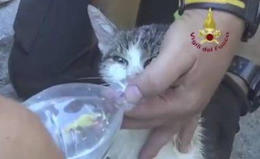 Macja nxirret e gjallë nga rrënojat, gjashtë ditë pas tërmetit në Itali (Video)