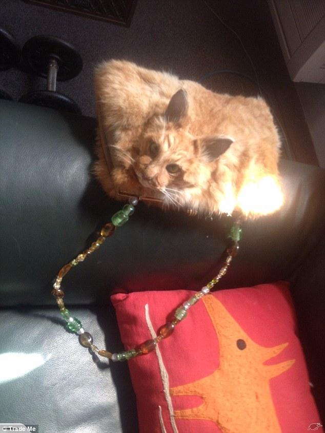 Del në shitje çanta nga macja e ngordhur qe ende e ka koken e paprekur foto 2