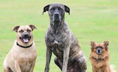 Cili është babai në këtë familje të qenve? (Foto)