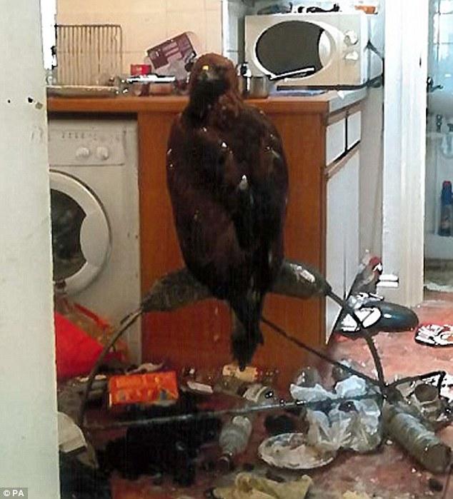 denim-per-burrin-qe-mbante-nje-shqiponje-ne-kuzhine-foto-2