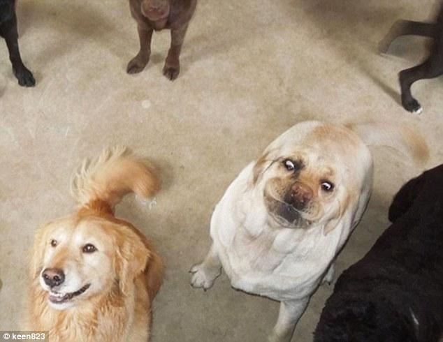 Pronarët publikojnë imazhet e kafshëve të tyre shumë jo fotozhenike foto 10