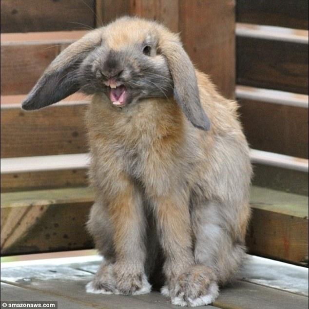 Pronarët publikojnë imazhet e kafshëve të tyre shumë jo fotozhenike foto 5