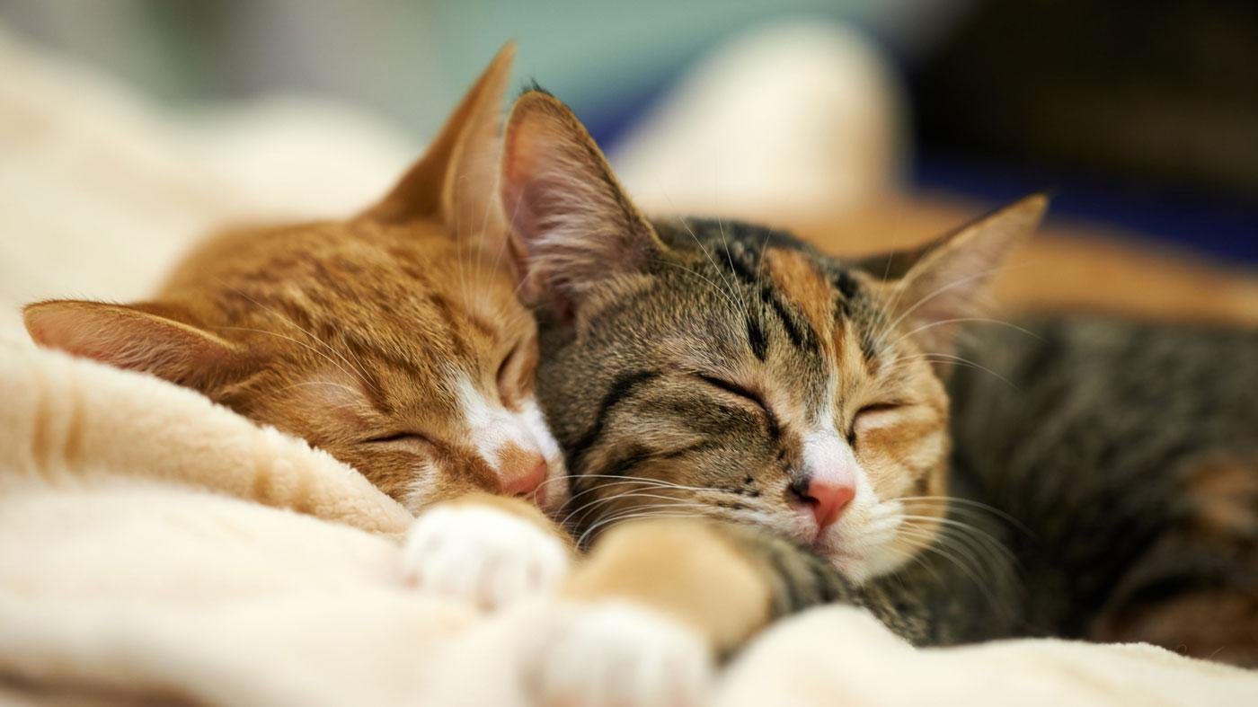percentage-day-cats-spend-sleeping_690ebe0d82d2f0e2